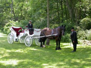 A horse drawn wedding carriage with driver